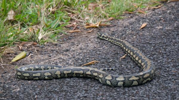 Jungle-Python